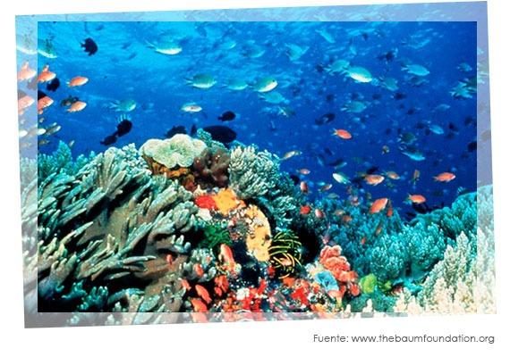 Peeling de Polvo de Coral